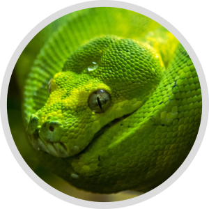 Python 3 Foundations  & Certification Package
