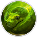 Python Career Paths